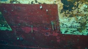 Centaur Red Cross underwater